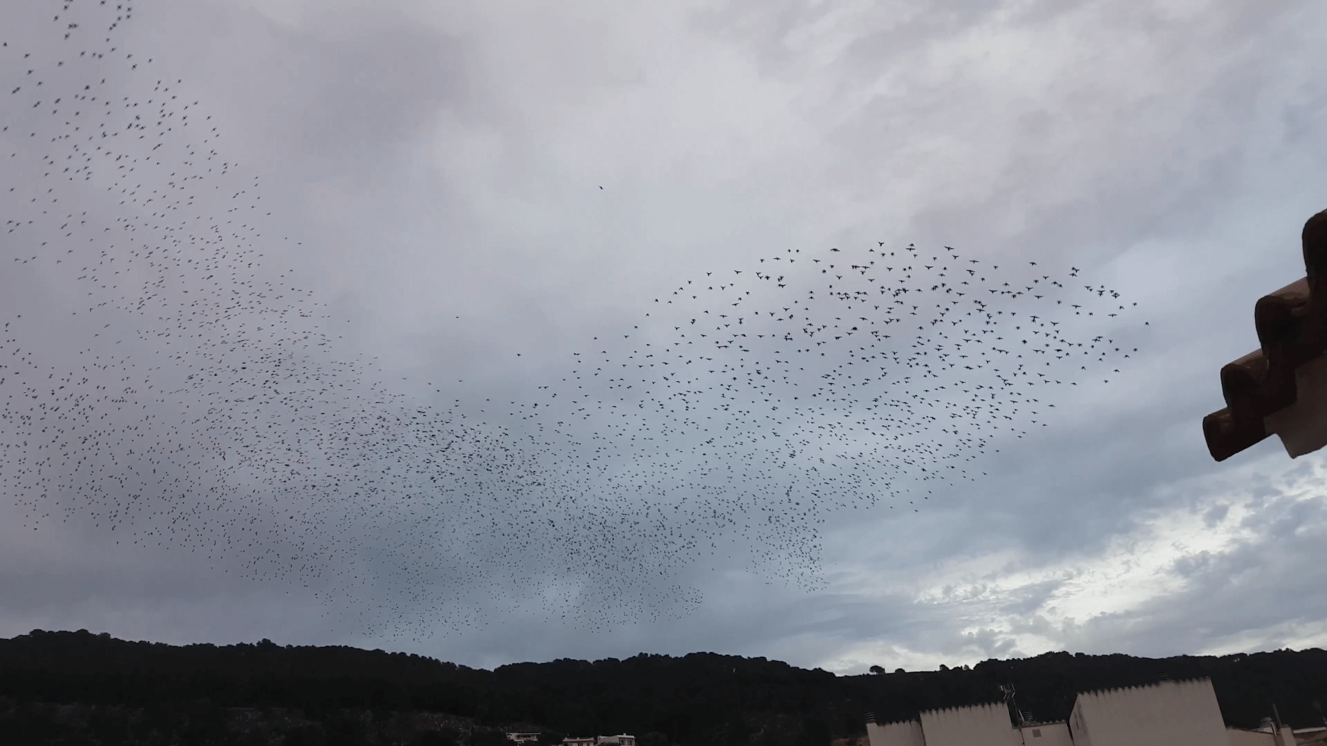 Crazy birds!